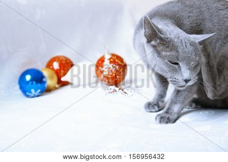 Cat itching near the Christmas decoration at home