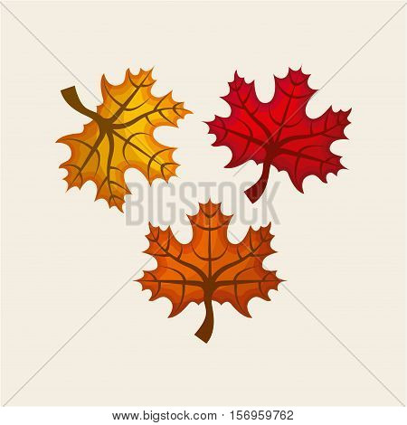 autumn dry leaves over white background. colorful design. vector illustration