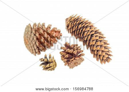 Several mature disclosed conifer cones of various coniferous trees on a light background