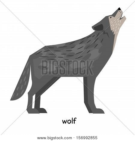 Terrible gray wolf  with a long tail howling