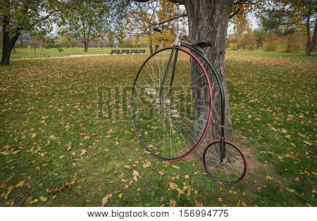 Penny farthing bicycle in a park with fallen autumn leaves