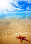 A large red Starfish on gorgeous summer beach poster