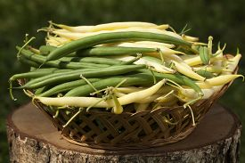 green and yellow bean in basket on trunk