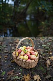 Basket of apples on a wooden bridge with autumn leaves.