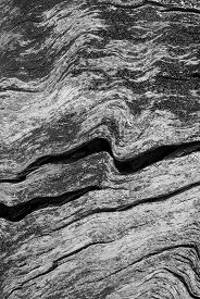 Abstract nature background - black and white wood texture.
