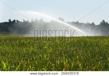 Irrigating The Maize In A Period Of Drought In The Summer In The Netherlands