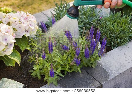 Spraying Plants In A Planter In The Summer