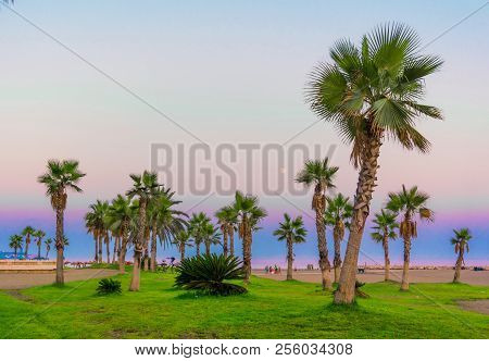 Palm Trees. Tropical Beach Background. Summer Vacation And Nature Travel Adventure Concept. Photo St