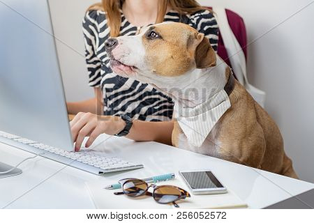 Going To Work With Pets Concept: Cute Dog With Female Owner In Front Of A Desktop Computer In Office