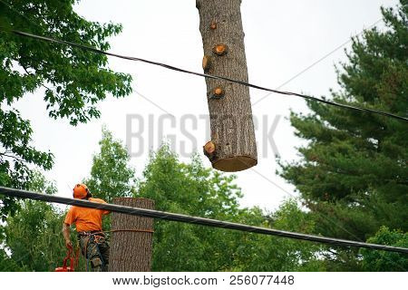 Manual Worker Removing Tree With Crane In Residential Area
