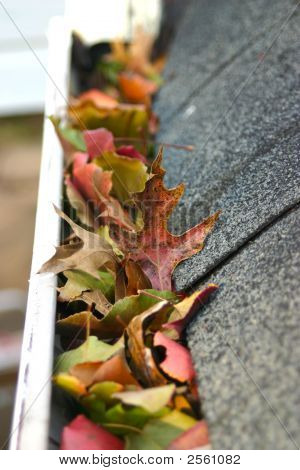 Leaves In Gutter #3