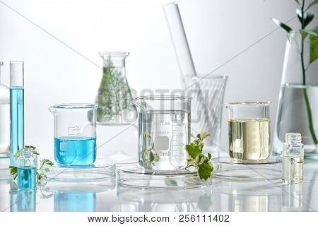 Cosmetic Laboratory Research And Development . Science Bio Skincare Cream Serum Product With Leaves.