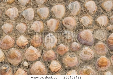 Seashells On The Facade Of A House
