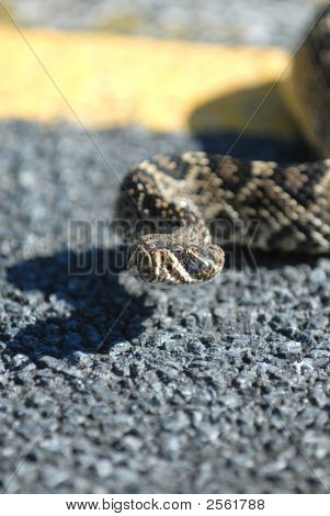 The Eastern Diamondback Rattlesnake
