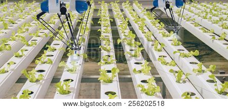 Smart Robotic In Agriculture Futuristic Concept, Robot Farmers (automation) Must Be Programmed To Wo