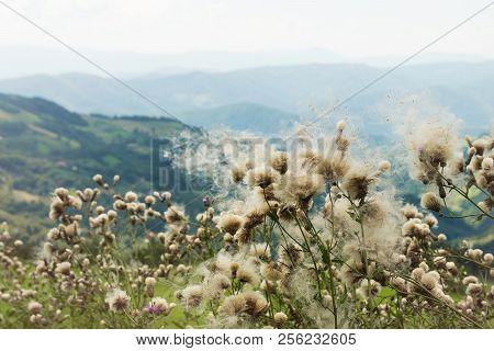 Mountain Flowers Landscape Flowers On The Wind. Mountain Flowers Landscape. Mountain Range Landscape