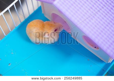 A Cute Little Hamster (selective Focus On The Hamster)