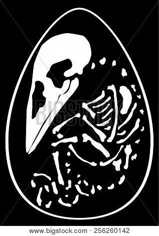 Hatchling Bird Skeleton Inside Egg, Vector, Vertical, Black Background, Isolated