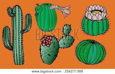 Cacti Graphic Isolated Vector Set. Cactus Collection