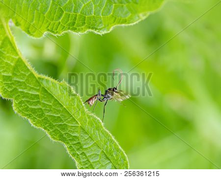 Sideways Shot Of A Parasitic Wasp In Natural Green Ambiance