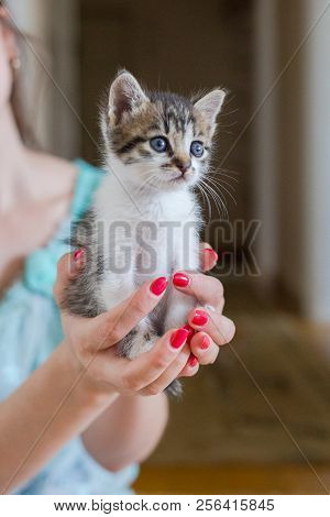Close Up Of Cute Kitty In Woman's Hands.