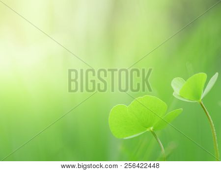 Close Up Beautiful Natural 2 Green Leaves And Yellow Sunlight With Greenery Background In The Garden
