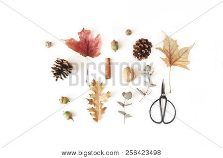 Autumn Botanical Floral Composition. Maple, Oak And Dry Eucalyptus Leaves Pattern With Pine Cones, N