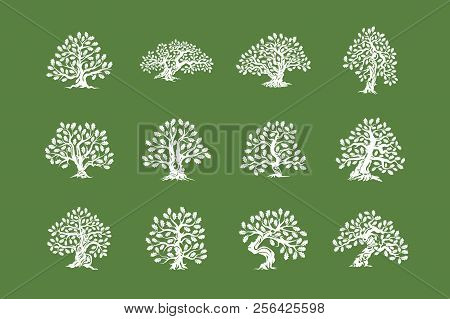 Huge And Sacred Oak Tree Plant Silhouette Logo Isolated On Green Background Set.