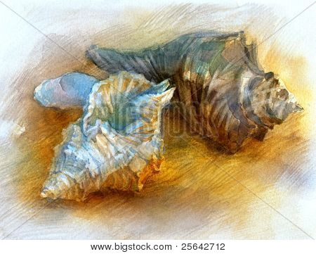 Seashells on the beach. Artwork made by a watercolor.