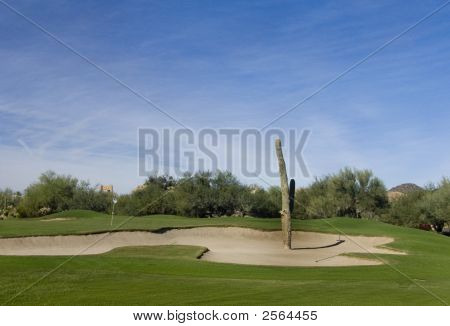 Golf Course In The Desert