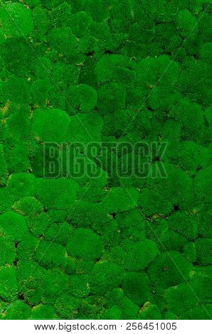 Nice Green Moss Wall Background Concept Image