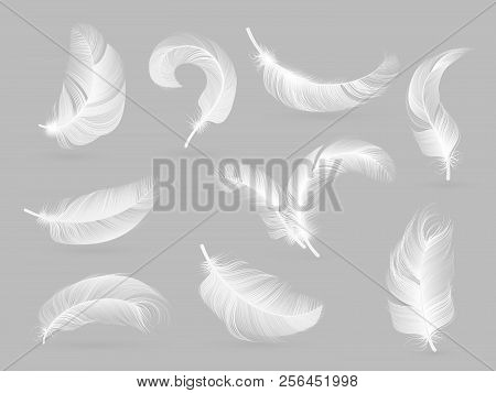 Realistic Feathers. White Bird Falling Feather Isolated On White Background Vector Collection. Illus