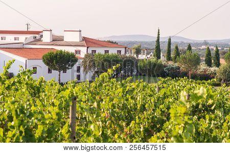 Landscape Close To Estremoz, Evora Distric, Portugal.