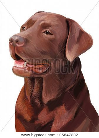 portrait of pure-blooded chocolate labrador dog