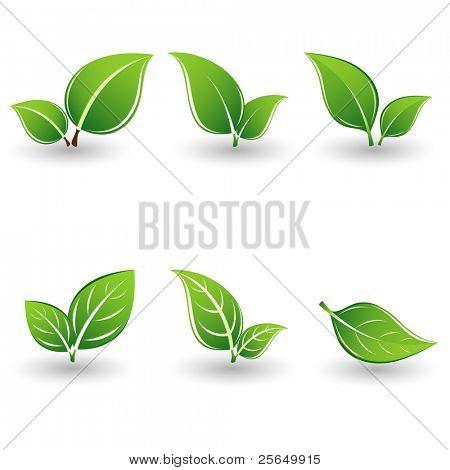 Set of green leaves. Element for design.