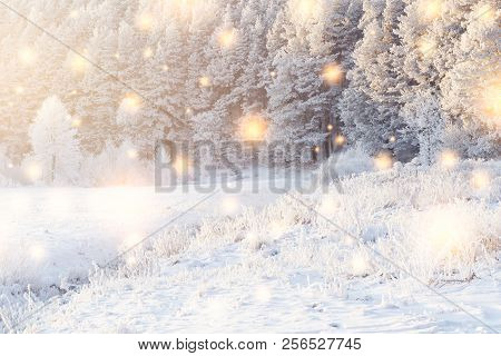 Shining Magic Snowflakes Fall On Snowy Forest In Sunlight. Christmas Background. Winter Nature Lands