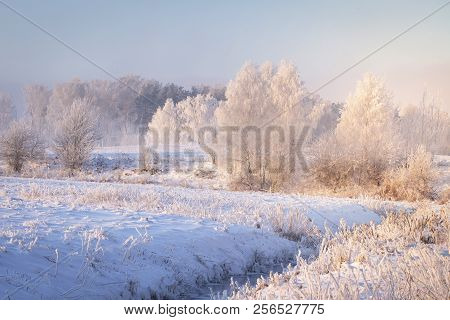 Amazing Winter Landscape. Trees And Plants With Hoarfrost On Snowy Meadow In Clear Morning. Christma
