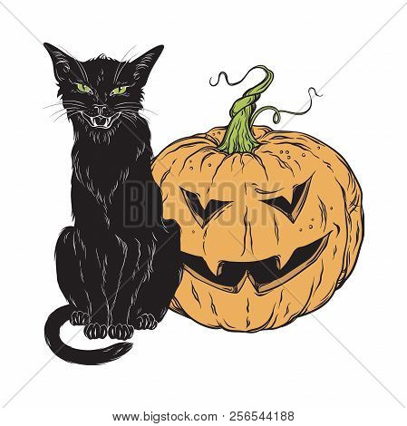 Black Cat Sitting With Halloween Pumpkin Isolated Over White Background Vector Illustration. Witches