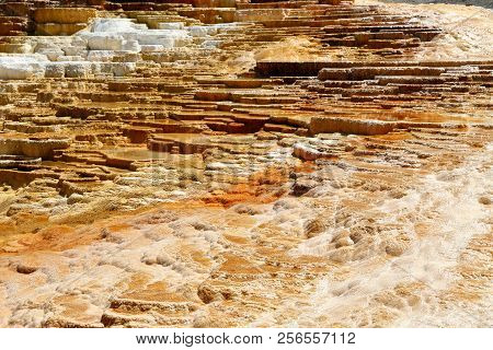 Lower Terraces Area, Mammoth Hot Springs, In Yellowstone National Park Wyoming, Usa