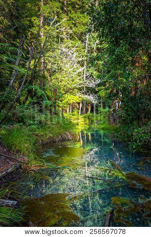 Lake In Whakarewarewa Redwood Forest, Rotorua, New Zealand