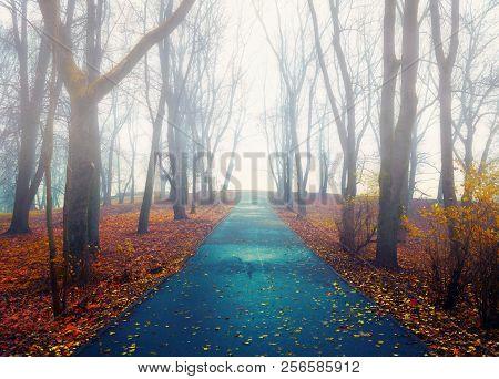 Autumn landscape - deserted foggy autumn park alley with bare autumn trees and dry fallen orange autumn leaves. Foggy autumn alley - autumn mysterious landscape