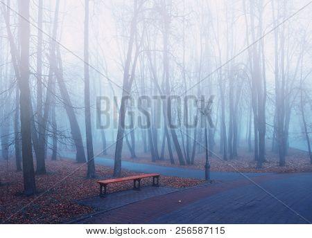 Autumn park in dense fog - foggy autumn park with fallen autumn leaves and bench near the bare autumn trees. Autumn foggy landscape