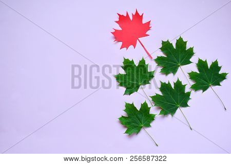 Paper Maple Leaf And Green Leafs. Leadership Concept On Pink Background.
