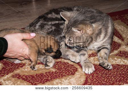Cat, Resting Cat With Dog, Cute Funny Cat Close Up, Domestic Cat, Relaxing Cat, Cat Resting, Cat Pla