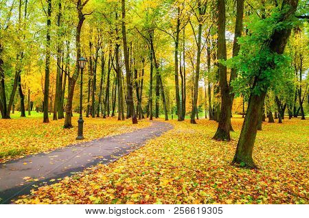 Autumn landscape with colorful autumn trees and yellow fallen leaves. Autumn deserted alley in the city autumn park. Colorful autumn park landscape, autumn trees along the alley