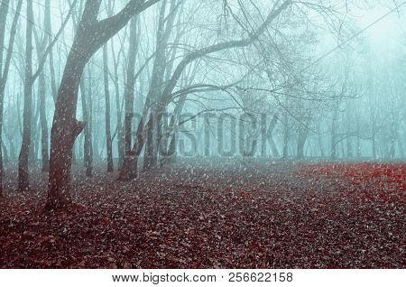 Autumn November landscape. Foggy autumn park with snow falling on the dry autumn leaves. The end of the autumn season.  Autumn landscape scene
