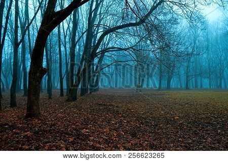 Autumn mysterious landscape - foggy autumn forest with bare autumn trees and fallen red autumn leaves on the ground. Autumn picturesque landscape scene
