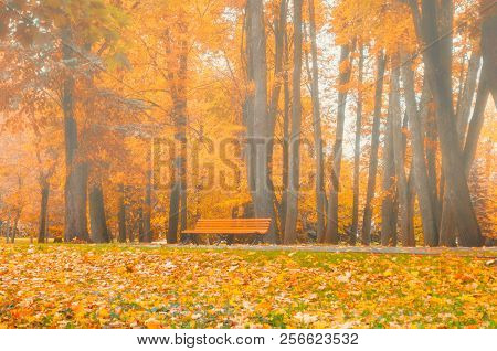 Autumn foggy landscape. Bench under the orange autumn trees in the colorful autumn park. Foggy autumn landscape view, colorful autumn nature