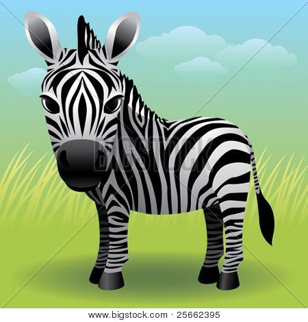 Baby Animal collection: Zebra
