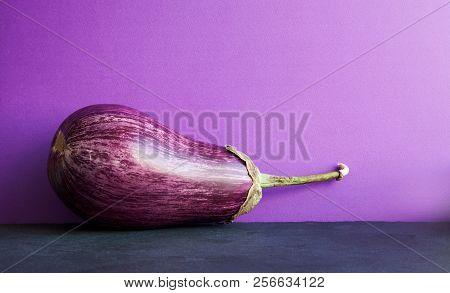 Ripe Purple Eggplant On Violet Black Background. Organic Vegetable With Beautiful Striped Pattern. C